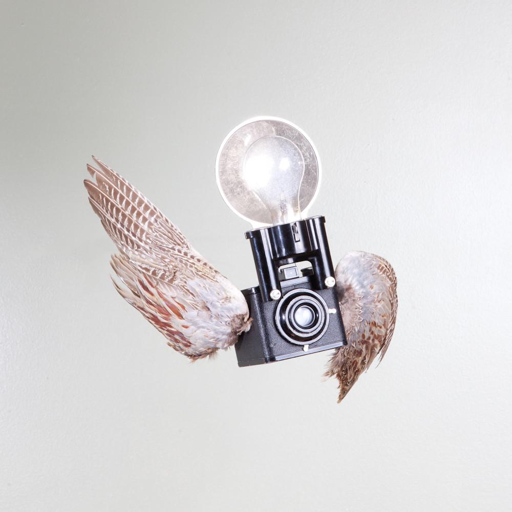 Birds of Aperture by Paul Octavious