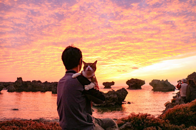 Daisuke Nagasawa watches the sunset with his Cat Daikichi on a beautiful Japanese beach. (Photo by Daisuke Nagasawa/Caters News Agency)