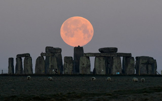 """Sheep graze as the full moon, known as the """"Super Pink Moon"""", sets behind Stonehenge stone circle near Amesbury, Britain, April 27, 2021. (Photo by Toby Melville/Reuters)"""