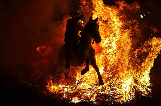 "A man rides a horse through a bonfire as part of a ritual in honor of Saint Anthony the Abbot, the patron saint of domestic animals, in San Bartolome de Pinares, Spain, Saturday, January 16, 2016. On the eve of Saint Anthony's Day, dozens ride their horses through the narrow cobblestone streets of the small village of San Bartolome during the ""Luminarias"", a tradition that dates back 500 years and is meant to purify the animals with the smoke of the bonfires and protect them for the year to come. (Photo by Francisco Seco/AP Photo)"