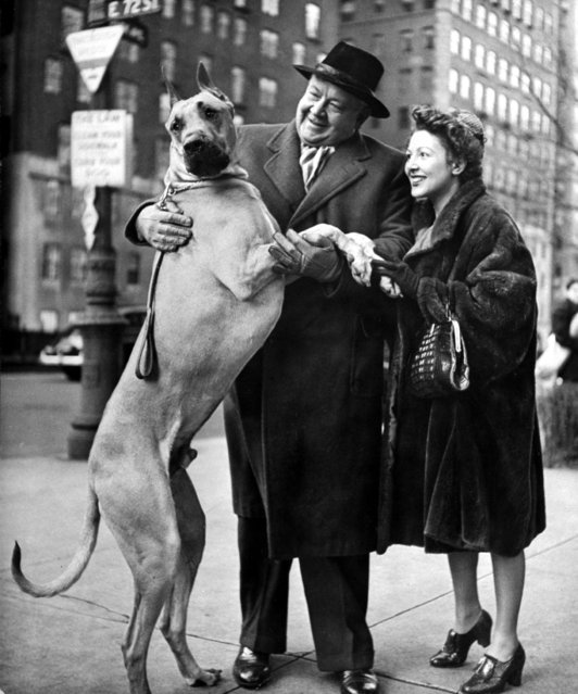 """Nina Leen, one of the first female photographers to work for Life, took pictures for the magazine from 1940 to 1972. In the mid-1940s, her essay, """"City Dogs"""", featured actors and artists with their pets on the streets of New York City. Here: Metropolitan Opera's Helden tenor Lauritz Melchior w. his wife, petting his Great Dane dog on street. (Photo by Nina Leen/Pix Inc./The LIFE Picture Collection/Getty Images)"""