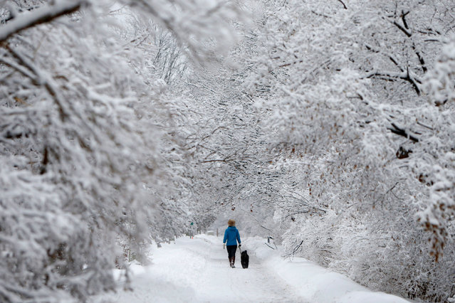 A woman walks a dog on a snow-covered path beside the Rideau Canal in Ottawa, Ontario, Canada January 4, 2017. (Photo by Chris Wattie/Reuters)