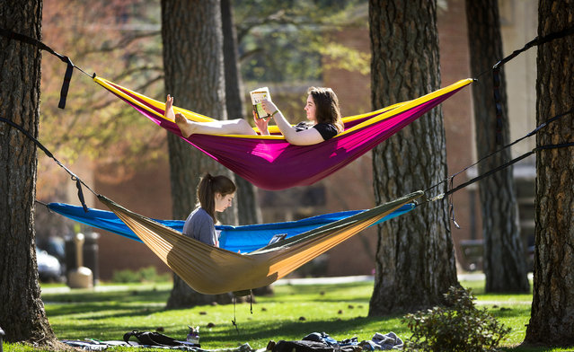 "Whitworth University students Melia Deters, top, and Skyler Noble, take advantage of the warm weather to study in their hammocks strung between pine trees on campus, Monday, April 20, 2015, in Spokane, Wash. ""I like being in fellowship with people, and when you're in hammocks, it makes it even cooler"", said Deters. (Photo by Colin Mulvany/The Spokesman-Review via AP Photo)"