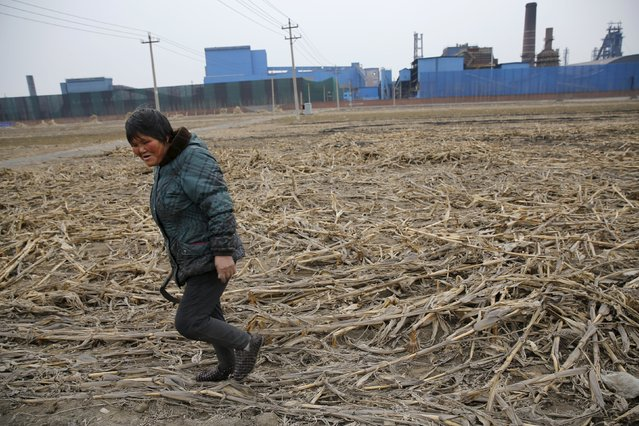 A farmer works on a corn field next to a closed steel factory in Tangshan, China, February 27, 2016. Picture taken on February 27, 2016. (Photo by Kim Kyung-Hoon/Reuters)