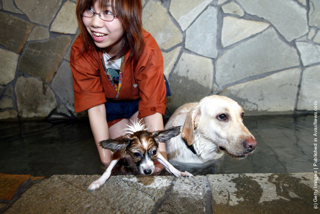 Dogs take a bath in hot springs at Oedo Resort and Spa in Tokyo, Japan
