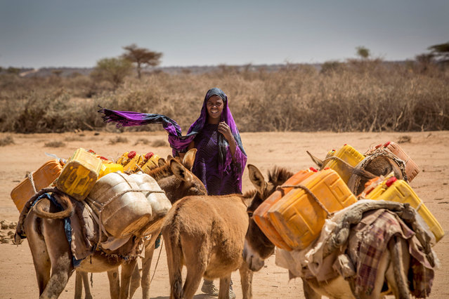 A woman leads her donkeys loaded with jerrycans in the drought-stricken Baligubadle village near Hargeisa, the capital city of Somaliland, in this handout picture provided by The International Federation of Red Cross and Red Crescent Societies on March 15, 2017. (Photo by Reuters/The International Federation of Red Cross and Red Crescent Societies)