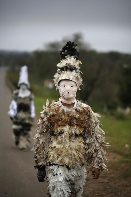 Alfredo Ortega, dressed in his bird-feather suit, walks along a highway as he makes his way to the celebrations honoring the feast day of St. Francis Solano, in Emboscada, Paraguay, Friday, July 24, 2015. In a mix of Indian and Catholic beliefs, Paraguayans in this small town paid homage to the Spanish friar on Friday in a religious festivity that involves dressing up in bird-feather suits. (Photo by Jorge Saenz/AP Photo)