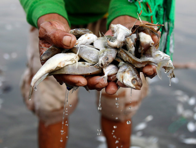 A Filipino government worker collects dead fish along the coast of Freedom Island in Paranaque City, south of Manila, Philippines, 11 October 2019. The Manila Maritime Police Station discovered a large number of different species of dead fish on the shores of Freedom island, a nature reserve south of Manila Bay. The Bureau of Fisheries and Aquatic Resources (BFAR) advised residents in the area not to take and eat the dead fish amid reports of some people collecting fish from the shore to sell and consume. (Photo by Francis R. Malasig/EPA/EFE)