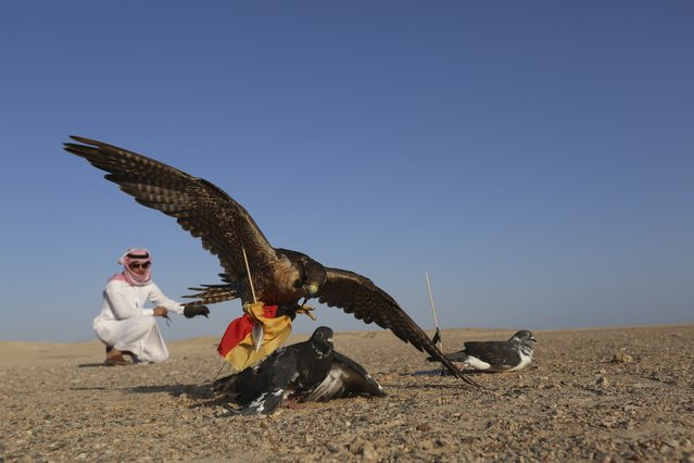 A falcon tries to catch a pigeon, symbolising the national soccer team of Germany in the Brazil 2014 World Cup, during a falconry session north of Tabuk July 10, 2014. The falcon was released and allowed to catch its prey, as part of an event to predict the winner of the World Cup final match between Germany and Argentina. (Photo by Mohamed Alhwaity/Reuters)