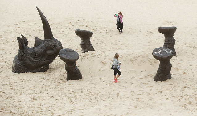 """A sculpture titled Buried Rhino is seen at """"Sculpture By The Sea"""" at Tamarama Beach on October 20, 2016 in Sydney, Australia. (Photo by Mark Metcalfe/Getty Images)"""