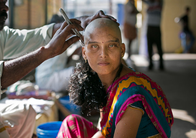 """28 year old Rupa has her hair shaven to donate to the Gods at the Thiruthani Murugan Temple November 10, 2016 in Thiruttani, India. Rupa donated her hair with the wish that her daughter's illness is cured. The process of shaving ones hair and donating it to the Gods is known as tonsuring. It is common for Hindu believers to tonsure their hair at a temple as a young child, and also to celebrate a wish coming true, such as the birth of a baby or the curing of an illness. The """"temple hair"""", as it's known, is then auctioned off to a processing plant and then sold as pricey wigs and weaves in the US, Europe and Africa. (Photo by Allison Joyce/Getty Images)"""
