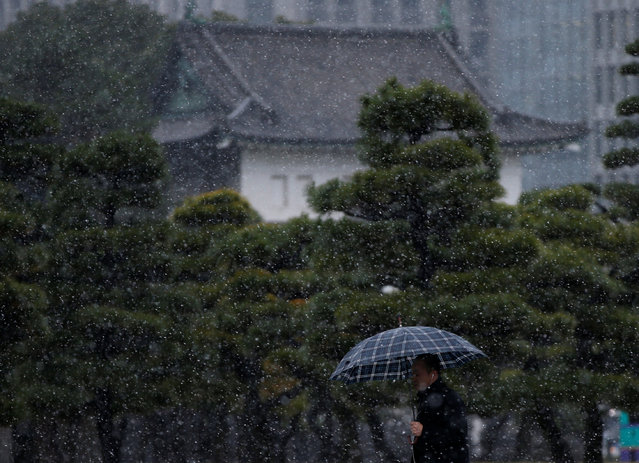 A man walks during the first November snowfall in 54 years in Tokyo, at the Imperial Palace in Tokyo, Japan, November 24, 2016. (Photo by Toru Hanai/Reuters)