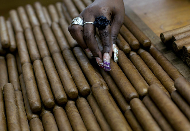 This March 1, 2013 file photo shows a worker selecting cigars at the H. Upmann cigar factory, where people can take tours as part of the 15th annual Cigar Festival in Havana, Cuba. (Photo by Ramon Espinosa/AP Photo)