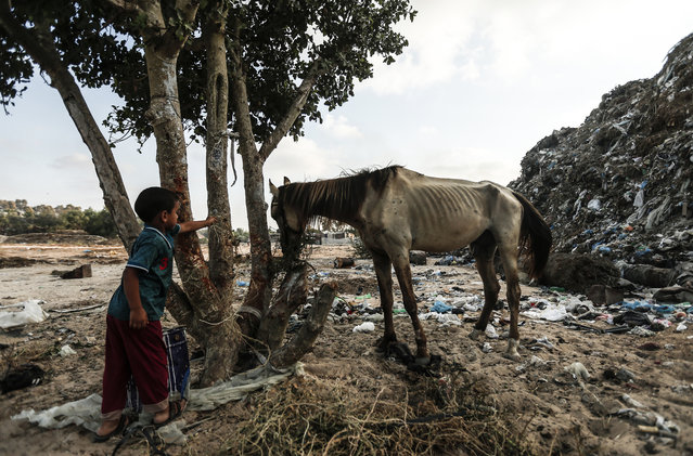 A Palestinian child looks at a horse in an impoverished neighbourhood of the Khan Younis refugee camp in southern Gaza Strip on August 25, 2018. The United States said yesterday that it had cancelled more than two hundred million dollars in aid for the Palestinians in the Gaza Strip and West Bank. (Photo by Mahmud Hams/AFP Photo)