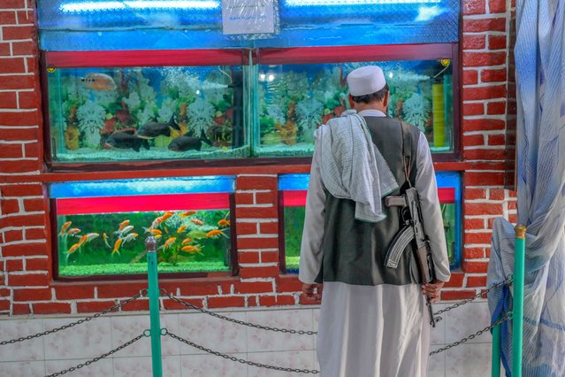 A Taliban fighter looks at an aquarium at the Kabul Zoo on September 17, 2021. (Photo by Bulent Kilic/AFP Photo)