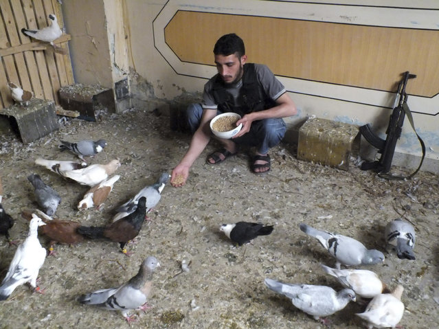 """A """"Free Syrian Army"""" fighter feeds pigeons in Homs, Syria May 24, 2013. (Photo by Yazen Homsy/Reuters)"""