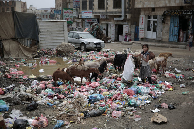 In this July 26, 2017 file photo, a girl scavenges for recyclable items at a garbage dump in a street in Sanaa, Yemen. An Associated Press investigation finds that Yemen's massive cholera epidemic was aggravated by corruption and official intransigence. The investigation has found that both the Iranian-backed Houthis rebels and their main adversary in the war – the U.S.- and Saudi-backed government that controls southern Yemen – impeded efforts by relief groups to stem the epidemic. (Photo by Hani Mohammed/AP Photo/File)