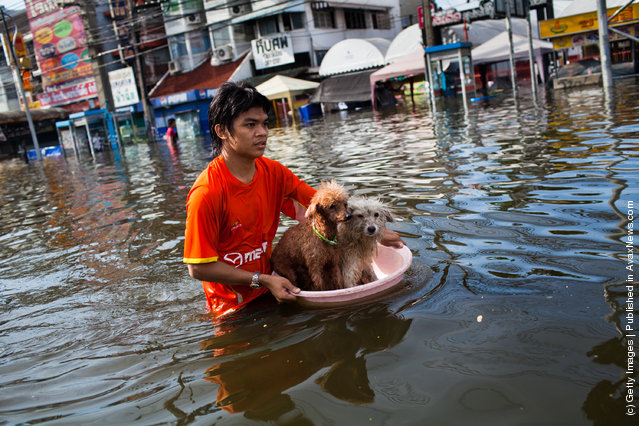 A Thai resident floats his pets down stream as he makes his way through the flooded streets