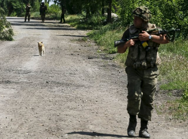 """A dog is seen as members of the Ukrainian armed forces patrol the area in the town of Maryinka, eastern Ukraine, June 5, 2015. Ukraine's president told his military on Thursday to prepare for a possible """"full-scale invasion"""" by Russia all along their joint border, a day after the worst fighting with Russian-backed separatists in months.  REUTERS/Gleb Garanich"""