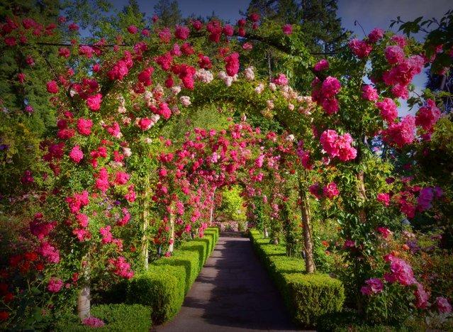Butchart Gardens - British Columbia, Canada