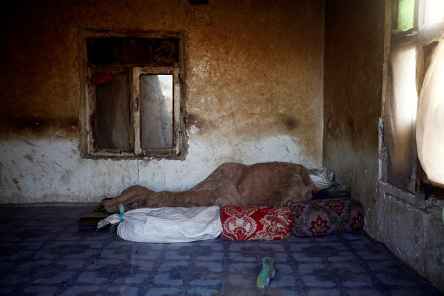 A labourer sleeps in a dorm at a brick factory on the outskirt of Sanaa, Yemen, June 5, 2016. (Photo by Mohamed al-Sayaghi/Reuters)