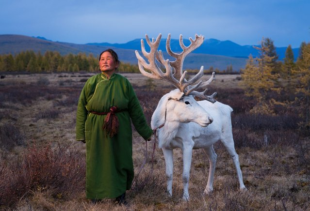Saintsetseg Jambaldorj, a member of the Tsaatan ethnic minority, one of the last remaining groups of nomadic reindeer herders in East Taiga, Mongolia, wearing a traditional deel, on July 5, 2016. (Photo by Madoka Ikegami/Barcroft Images)