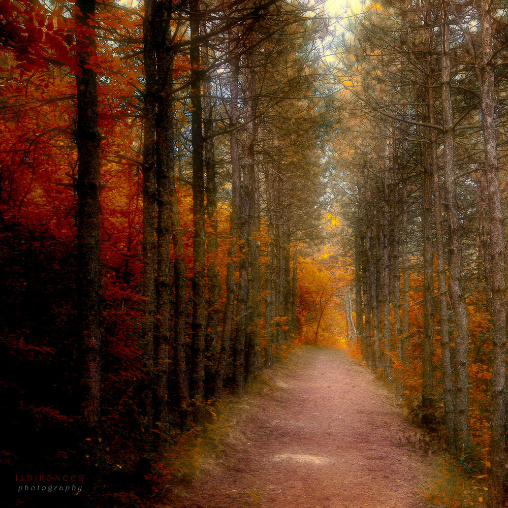Landscapes by Ildiko Neer