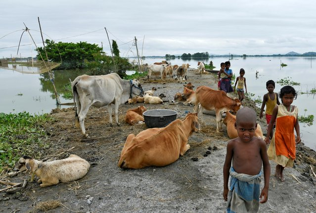 Children walk past cattle on an embankment in a flooded area in Morigaon district, in the northeastern state of Assam, India, July 20, 2020. (Photo by David Talukdar/Reuters)