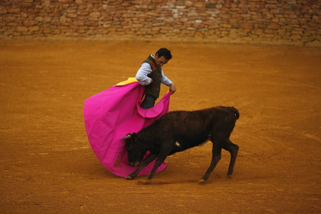 "Spanish bullfighter Manuel Jesus ""El Cid"" performs a pass to a heifer during a ""tentadero"" (a small bullfight to check the bravery of calves and heifers which are not killed) during the first International Biennial of bullfighting at Reservatauro Ronda cattle ranch in Ronda, near Malaga February 17, 2013. Spain's parliament voted on February 12 to consider protecting bullfighting as a national pastime, angering animal rights campaigners and politicians in two regions where the sport is banned. (Photo by Jon Nazca/Reuters)"