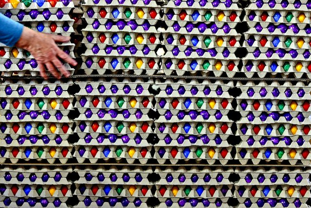 An employee of an Easter egg dyeing company lifts colored, cooked eggs in Thannhausen, German, on March 18, 2013. Up to 200 000 eggs are being dyed in the company daily for the Easter holiday. (Photo by Matthias Schrader/Associated Press)