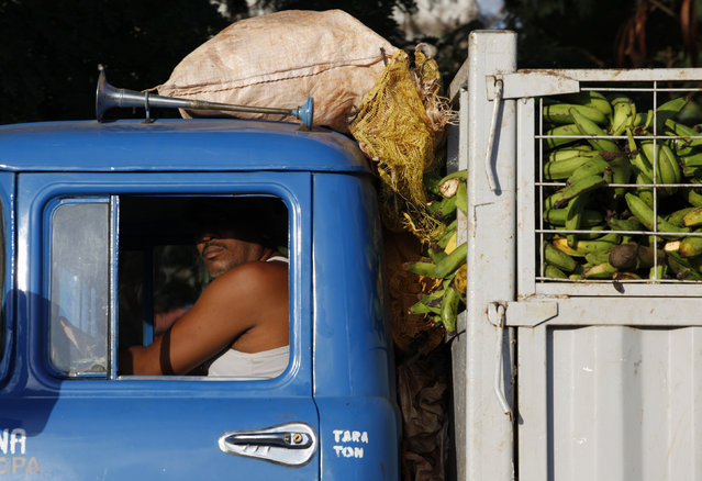 A man drives a truck loaded with bananas near a market in Havana, October 15, 2009. (Photo by Desmond Boylan/Reuters)