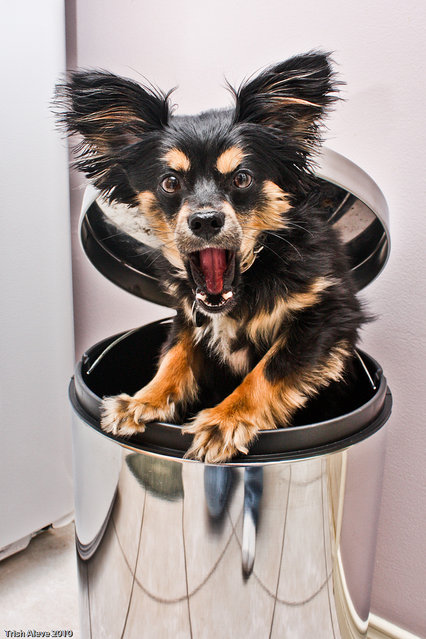 """""""Buster the Grouch"""". (Photo by Trish Aleve)"""