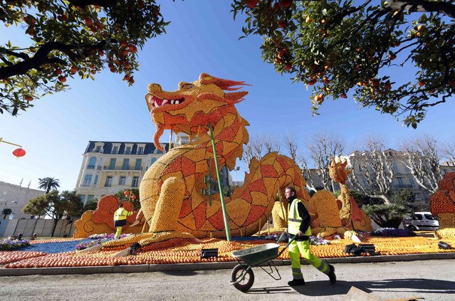 A gardener walks past a giant dragon made with lemons and oranges during the 82th Lemon festival in Menton February 12, 2015. (Photo by Eric Gaillard/Reuters)