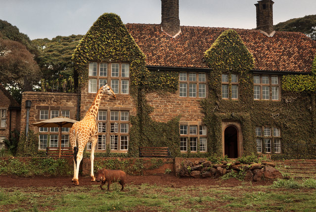 Set in 12 acres of private land within 140 acres of indigenous forest in the Karen suburb of Nairobi, the stately manor was originally erected as a home for Sir David Duncan in 1932. (Photo by Klaus Thymann)