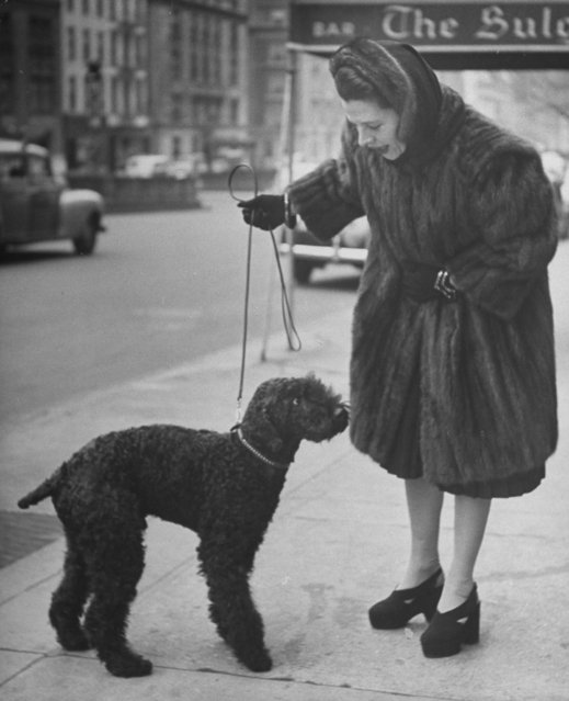 Actress Ruth Gordon clad in mink coat walking her black poodle on the street. (Photo by Nina Leen/Pix Inc./The LIFE Picture Collection/Getty Images)
