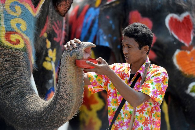 A mahout has his elephants hold a plastic container during water battles as part of celebrations of Songkhran – the Thai new year – in the city of Ayutthaya, north of Bangkok, on April 11, 2016. The Songkhran Festival is marked throughout Thailand with water fights during the days around the new year on April 13. (Photo by Christophe Archambault/AFP Photo)