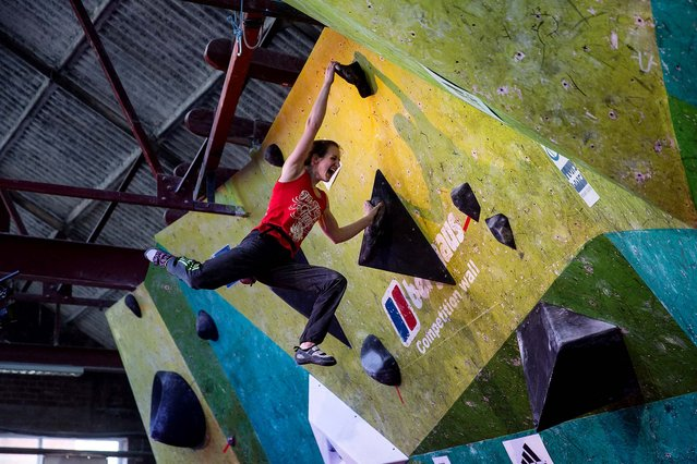 A climbers take part in the CWIF international bouldering competition, on March 16, 2014. The Climbing Works bouldering wall has over 1,000 square meters of climbing surface featuring hundreds of boulder challenges. (Photo by Oli Scarff/Getty Images)