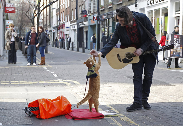"""Street musician James Bowen busks with cat Bob in Covent Garden in London, England March 13, 2012.  Bowen has written a book named """"A Street Cat Named Bob"""" about the experiences of the then-homeless pair and how they met. (Photo by Luke MacGregor/Reuters)"""