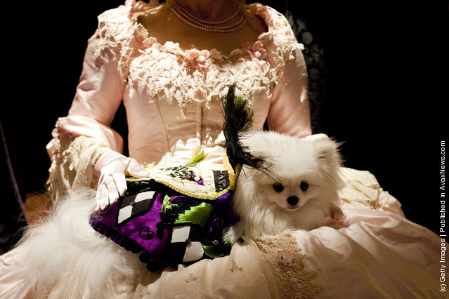 Dog Fashion Show Held Ahead Of Next Week's Westminster Kennel Club Dog Show