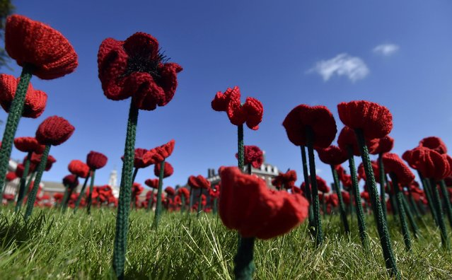 Detail is seen of a display of thousands of crocheted and embroidered poppies at the Chelsea Flower Show in London, Britain, May 23, 2016. (Photo by Toby Melville/Reuters)