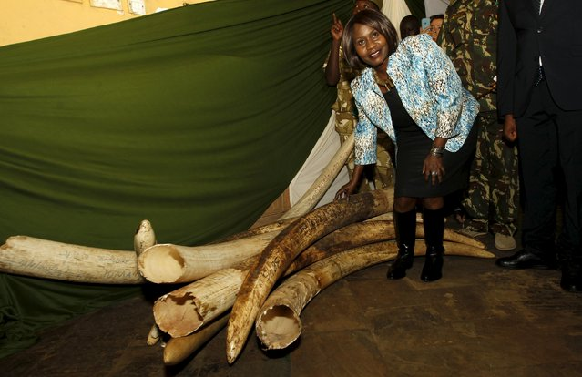 Kenya's Cabinet Secretary Ministry of Environment and Natural Resources Judi Wakhungu touches elephant tusks recovered from various operations at the Kenya Wildlife Services (KWS) headquarters in the capital Nairobi, July 21, 2015, during the commissioning of the inventory exercise of the national elephant ivory and rhino horn stockpile. (Photo by Thomas Mukoya/Reuters)