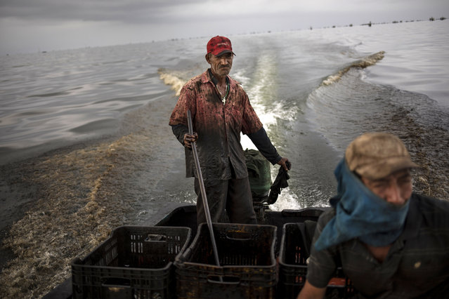 "Fisherman Jose Miguel Perez, whose nickname is ""Taliban"", navigates the oil infested waters of Lake Maracaibo, near Cabimas, Venezuela, May 21, 2019. Nobody lives as closely with the environmental fallout of Venezuela's collapsing oil industry as the fishermen who scratch out an existence on the blackened, sticky shores of Lake Maracaibo. (Photo by Rodrigo Abd/AP Photo)"