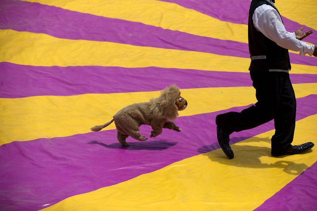 """A clown performs with a dog in a lion's costume, during a free public show to protest Mexico City's ban on circus animals in Mexico City's main square, the Zocalo, on Jule 22, 2014. Mexico's """"circus wars"""" are heating up, as a growing movement to ban circus animals, other than horses and dogs, is meeting rising anger from circus workers. Circuses say threats of violence against them have been posted online. (Photo by Rebecca Blackwell/Associated Press)"""