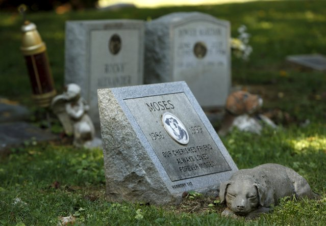 """A dog's headstone for """"Moses"""" is seen at the Aspin Hill Memorial Park in Aspen Hill, Maryland, August 25, 2015. (Photo by Gary Cameron/Reuters)"""