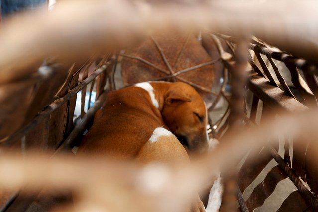 A dog sleeps away in a metal cage at the shrine of the iron god Ogun during an annual prayer and sacrifice in Abuja, Nigeria June 23, 2015. (Photo by Afolabi Sotunde/Reuters)
