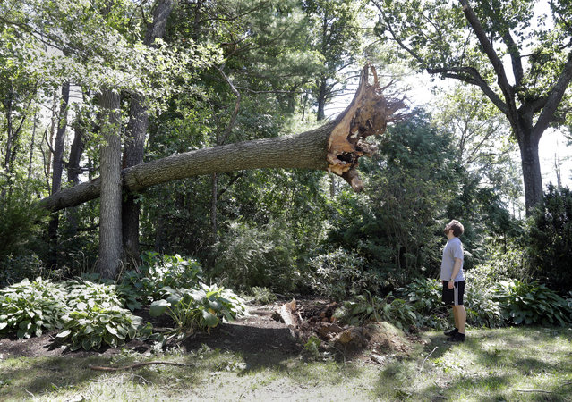 Ian Thompson looks up at a large tree uprooted in his neighborhood Monday, August 22, 2016, in Concord, Mass. A tornado briefly touched down in the historic Massachusetts town, uprooting trees, knocking out power, and causing damage to dozens of homes. There were no reports of injuries. (Photo by Elise Amendola/AP Photo)