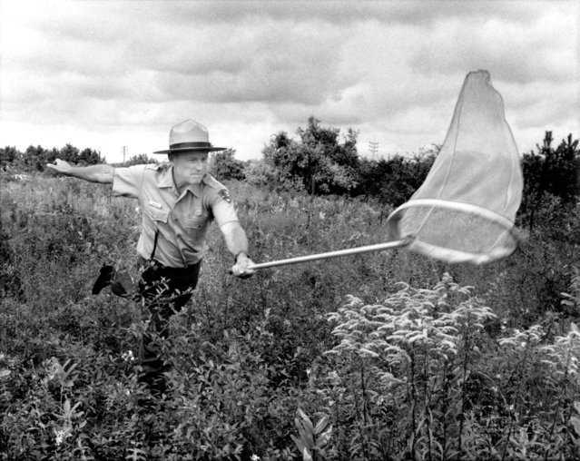 Annual butterfly census was taken in the greater New York are by the National Park service at various gateway National Park locations in Queen, Bklyn, Staten Island and Sandy Hook, NJ. on September 07, 1992. Shown here is Jamaica Bay mildlife refuge's chief ranger Don Riepe, wielding his butterfly net, exhibiting a monarch butterfly (one is counted, the other is live and being shown to Nicholas Kobe, 10, of Naspethe). Volunteers around the city assistant in census, now in its seventh year. (Photo by Ralph Ginzburg/New York Post/Photo Archives, LLC via Getty Images)