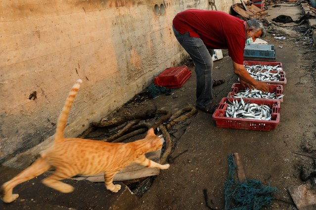 A fisherman collects his catch as a cat walks past him at Gaza Seaport, after Israel allowed fishermen back to work up to 15 nautical miles following an agreement to end a weeks-long escalation between Israel and Palestinian militant groups, in Gaza City September 3, 2020. (Photo by Suhaib Salem/Reuters)