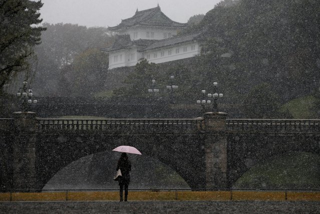 A tourist is seen during the first November snowfall in 54 years in Tokyo, at the Imperial Palace in Tokyo, Japan, November 24, 2016. (Photo by Toru Hanai/Reuters)