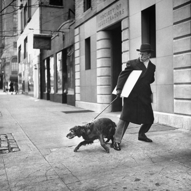 Artist Earle Winslow w. painting under his arm, struggling to control his stubborn Irish setter who wants to head for the curb on street. (Photo by Nina Leen/Pix Inc./The LIFE Picture Collection/Getty Images)